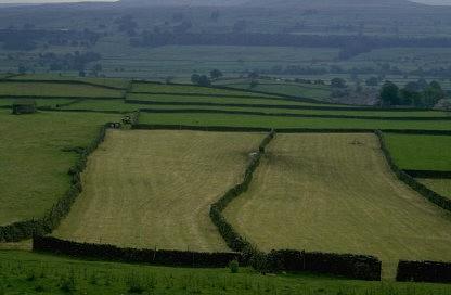 Grenzen auf Feldern
