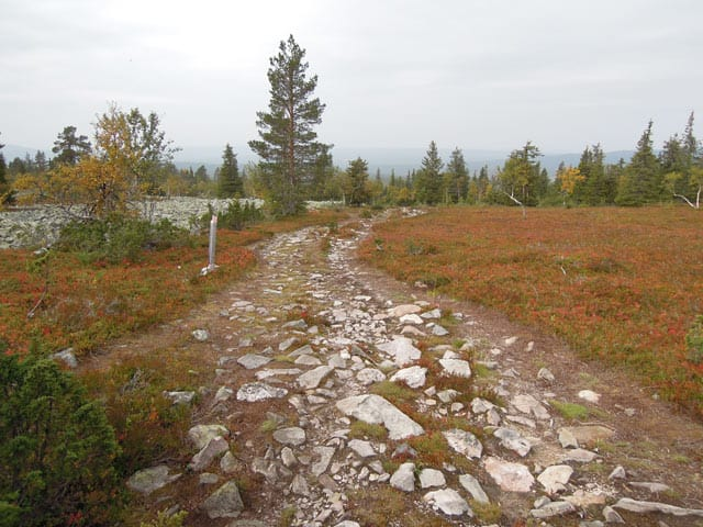 Wildpfad in Lappland