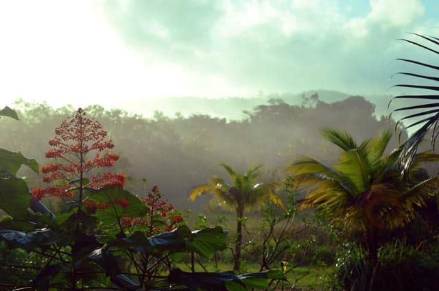 Regenwald in Französisch-Guayana