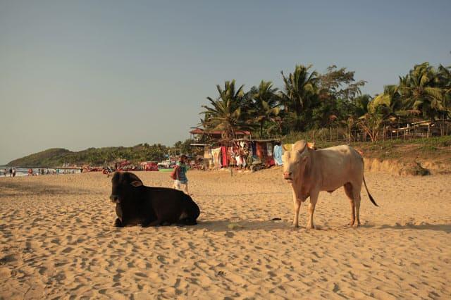 Am Strand von Goa