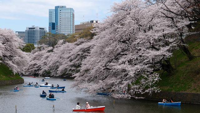 Bootfahrt während der Kirschblüte