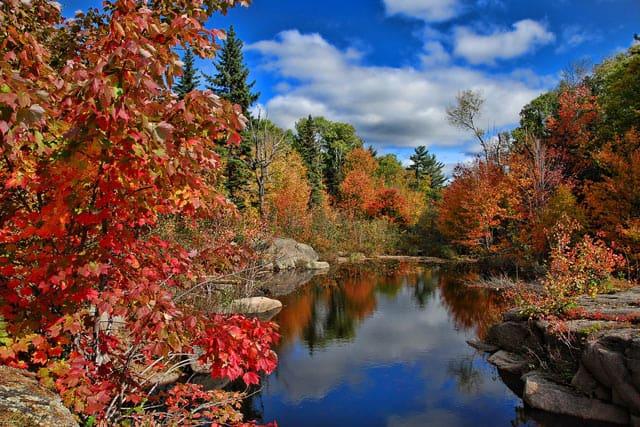 Kanadische Wälder im Herbst
