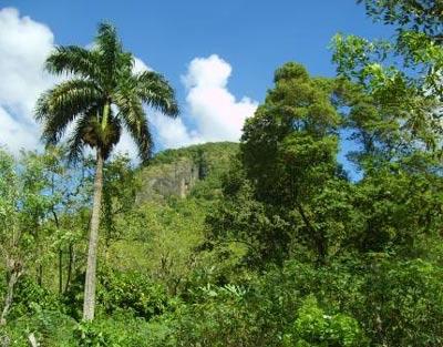 tropische Landschaft in der Dominikanischen Republik