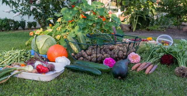 Gesunde Nahrung aus eigenem Anbau