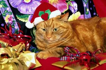 Weihnachtsgeschenke - auch im Ausland gesucht